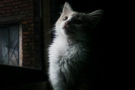 un gato llamado 'Blues' fotografía de Adriana Duarte para la nueva Bagatela